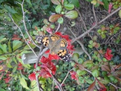 Laché des papillons MS 17