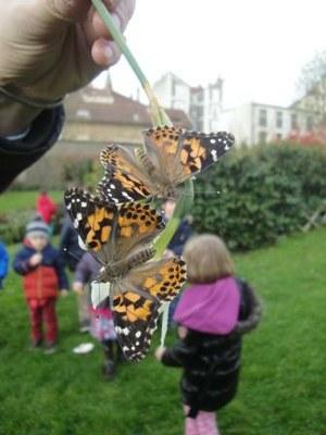 Laché des papillons MS 18